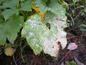 plant pathology Disease Control