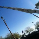 las vegas tree removal
