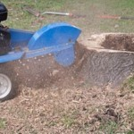Tree Removal with Power Stump Grinding