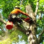 Tree-trimming