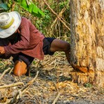man tree removal