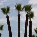 palm skinned