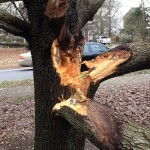 tree services summerlin