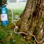 las vegas tree disease control
