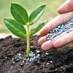 plants fertilization