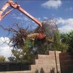 tree-removal4