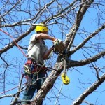 tree_service