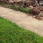 yard Trash Removal